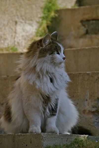 Cat at Arcosanti