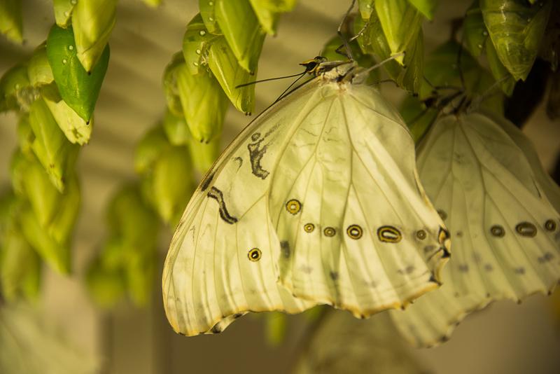 butterfly wonderland arizona