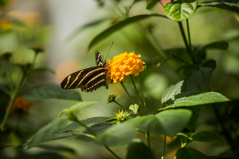 butterfly wonderland phoenix arizona