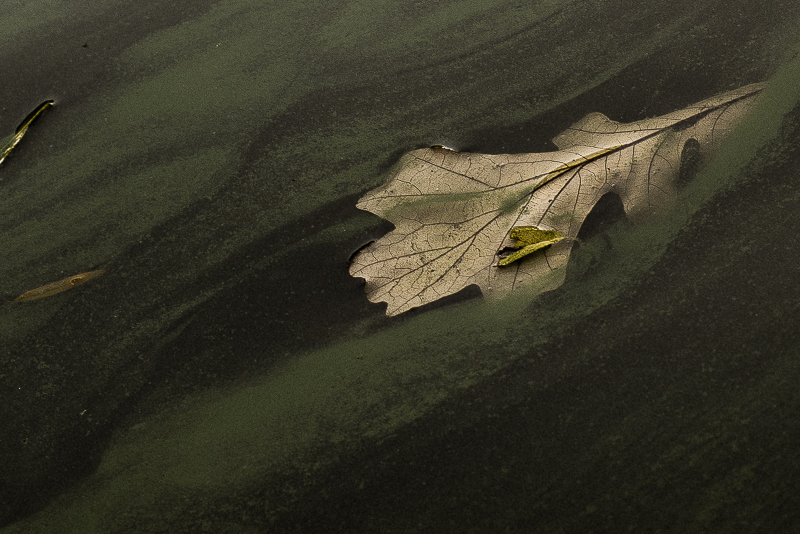Still life - leaf