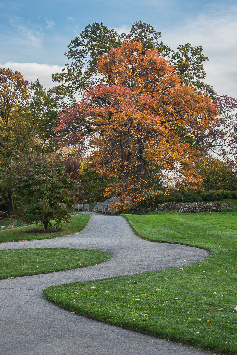 Autumn Color At The New York Botanical Garden Gotham Girl Chronicles