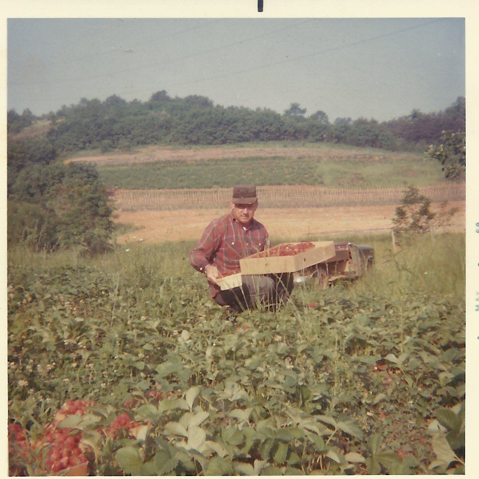 dad in the strawberry patch